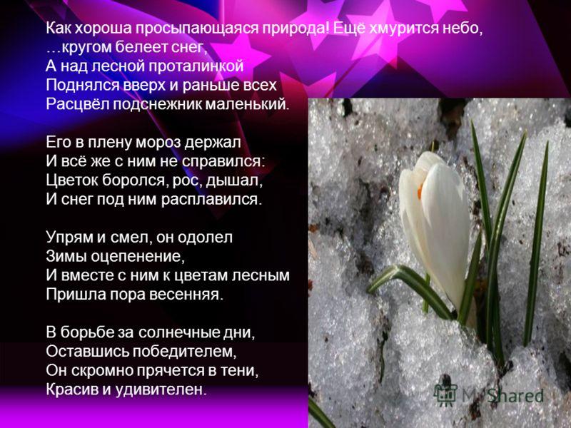 Как хороша просыпающаяся природа! Ещё хмурится небо, …кругом белеет снег, А над лесной проталинкой Поднялся вверх и раньше всех Расцвёл подснежник маленький. Его в плену мороз держал И всё же с ним не справился: Цветок боролся, рос, дышал, И снег под