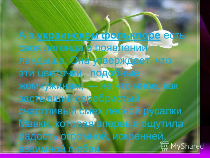 А в украинском фольклоре есть своя легенда о появлении ландыша. Она утверждает, что эти цветочки, подобные жемчужинам, не что иное, как застывший серебристый счастливый смех лесной русалки Мавки, которая впервые ощутила радость огромной, искренней, в