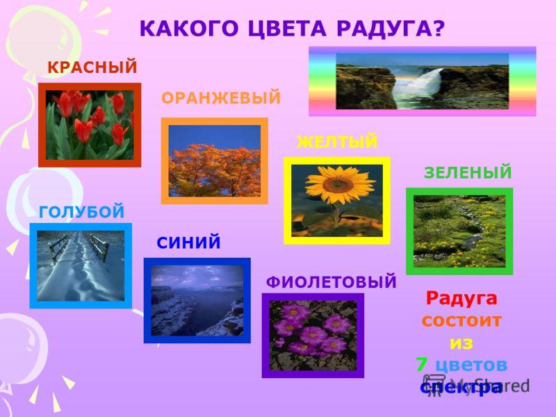 КАКОГО ЦВЕТА РАДУГА? КРАСНЫЙ ОРАНЖЕВЫЙ ЖЕЛТЫЙ ЗЕЛЕНЫЙ ГОЛУБОЙ СИНИЙ ФИОЛЕТОВЫЙ Радуга состоит из 7 цветов спектра