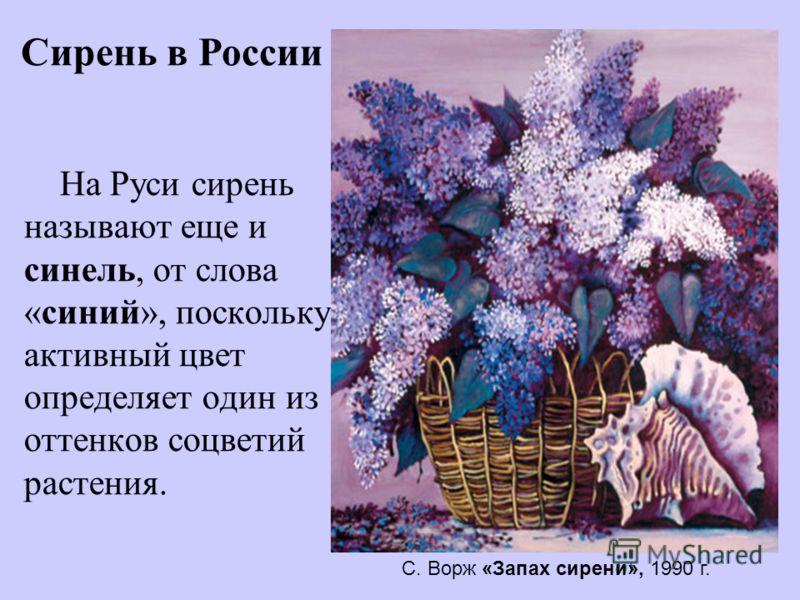 На Руси сирень называют еще и синель, от слова «синий», поскольку активный цвет определяет один из оттенков соцветий растения. Сирень в России С. Ворж «Запах сирени», 1990 г.