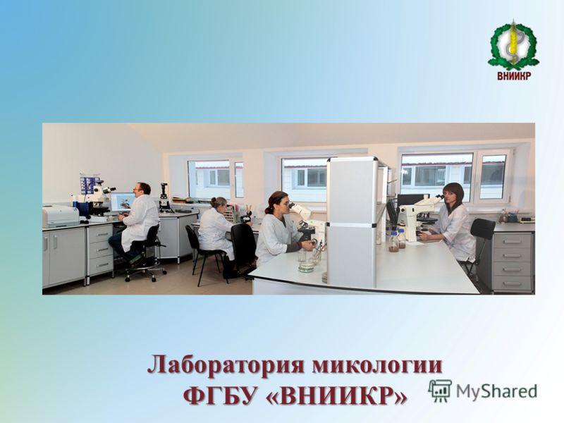 Лаборатория микологии ФГБУ «ВНИИКР»
