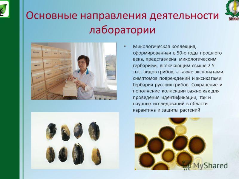 Основные направления деятельности лаборатории Микологическая коллекция, сформированная в 50-е годы прошлого века, представлена микологическим гербарием, включающим свыше 2 5 тыс. видов грибов, а также экспонатами симптомов повреждений и эксикатами Ге
