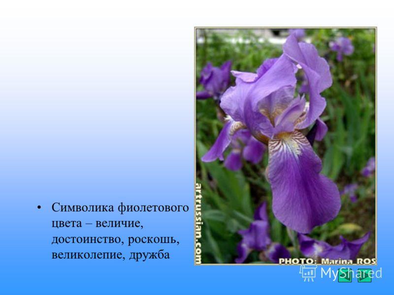 Символика фиолетового цвета – величие, достоинство, роскошь, великолепие, дружба