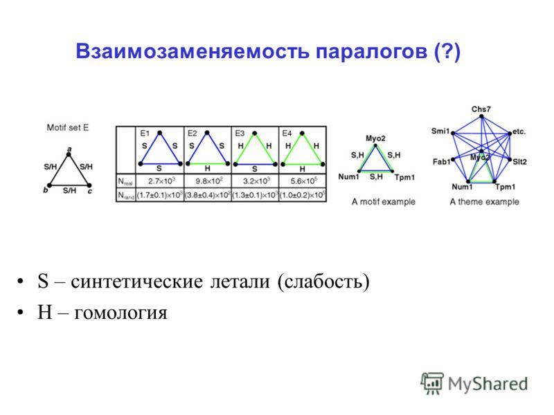 Взаимозаменяемость паралогов (?) S – синтетические летали (слабость) Н – гомология