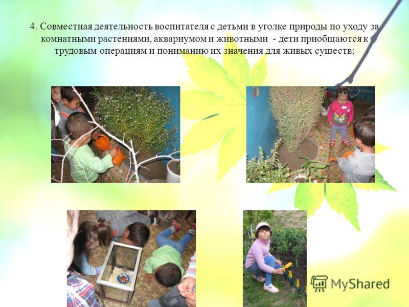 4. Совместная деятельность воспитателя с детьми в уголке природы по уходу за комнатными растениями, аквариумом и животными - дети приобщаются к трудовым операциям и пониманию их значения для живых существ;