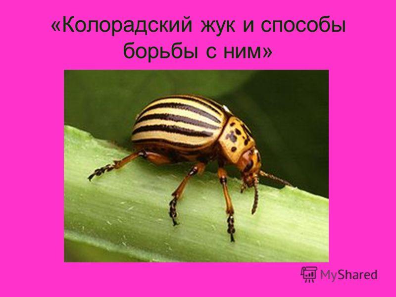 «Колорадский жук и способы борьбы с ним»