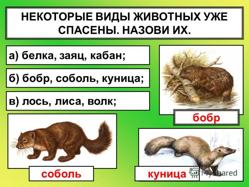 НЕКОТОРЫЕ ВИДЫ ЖИВОТНЫХ УЖЕ СПАСЕНЫ. НАЗОВИ ИХ. а) белка, заяц, кабан; б) бобр, соболь, куница; в) лось, лиса, волк; соболькуница бобр
