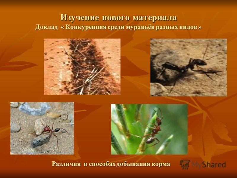 Изучение нового материала Доклад « Конкуренция среди муравьёв разных видов » Различия в способах добывания корма