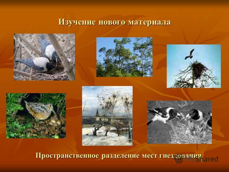 Изучение нового материала Пространственное разделение мест гнездования Пространственное разделение мест гнездования