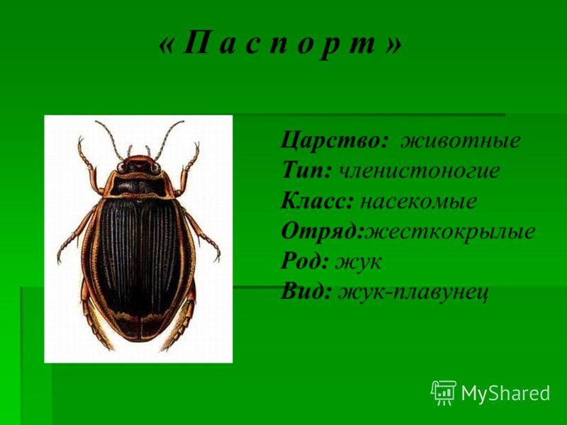 Насекомые отряд жесткокрылые род жук