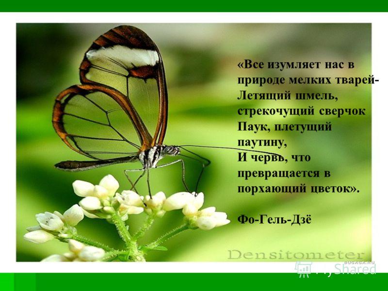 «Все изумляет нас в природе мелких тварей- Летящий шмель, стрекочущий сверчок Паук, плетущий паутину, И червь, что превращается в порхающий цветок». Фо-Гель-Дзё