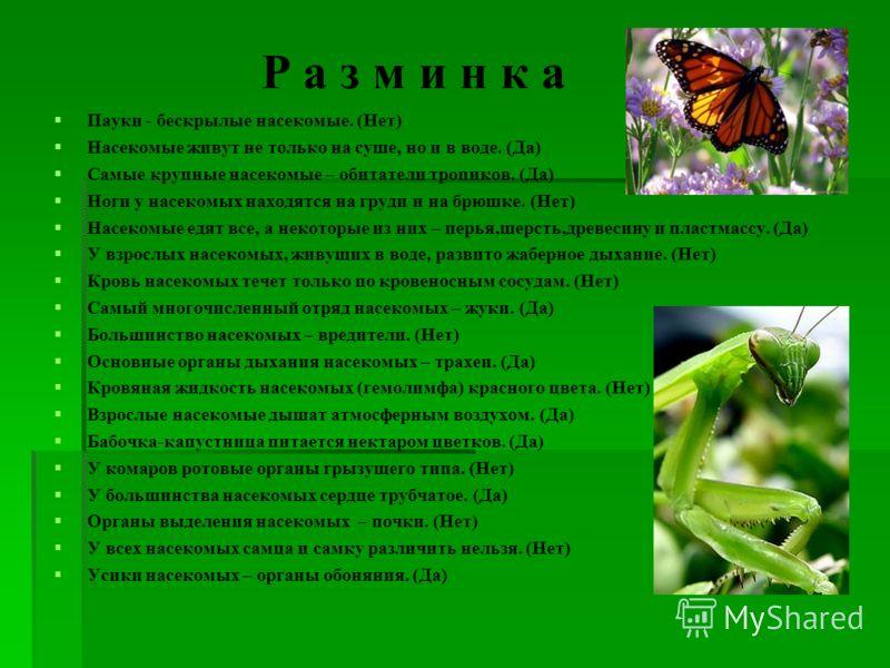 Р а з м и н к а Пауки - бескрылые насекомые. (Нет) Насекомые живут не только на суше, но и в воде. (Да) Самые крупные насекомые – обитатели тропиков. (Да) Ноги у насекомых находятся на груди и на брюшке. (Нет) Насекомые едят все, а некоторые из них –
