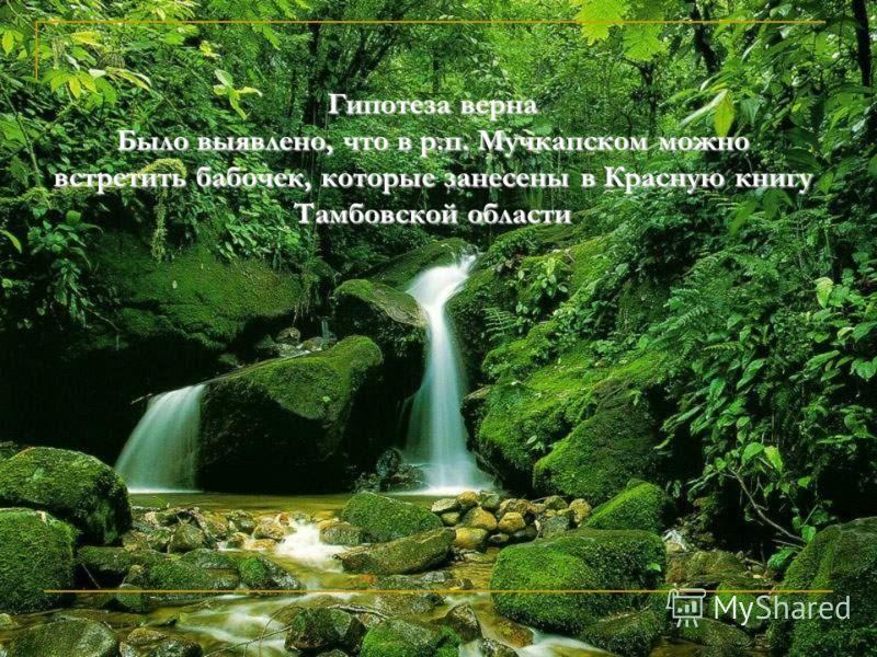 Гипотеза верна Было выявлено, что в р.п. Мучкапском можно встретить бабочек, которые занесены в Красную книгу Тамбовской области
