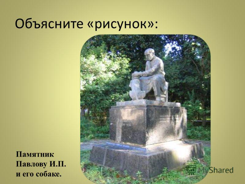 Объясните «рисунок»: Памятник Павлову И.П. и его собаке.