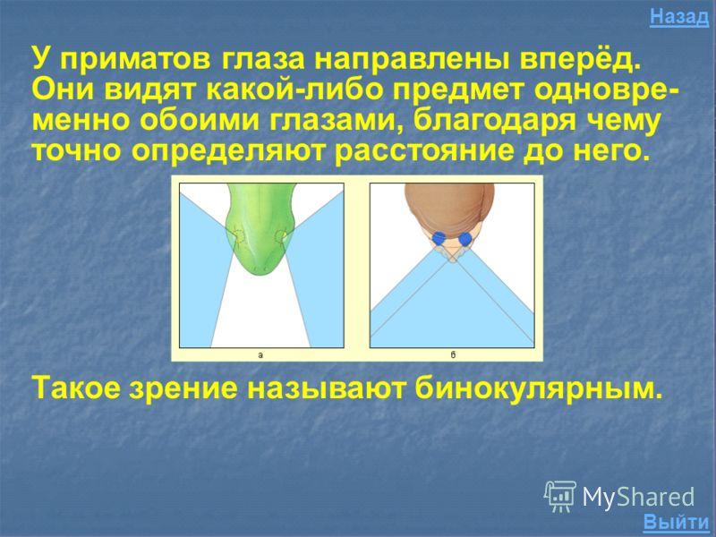 Какое зрение называется бинокулярным? 200 Правильный ответ