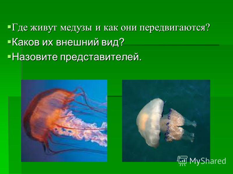 Где живут медузы и как они передвигаются? Где живут медузы и как они передвигаются? Каков их внешний вид? Каков их внешний вид? Назовите представителей. Назовите представителей.