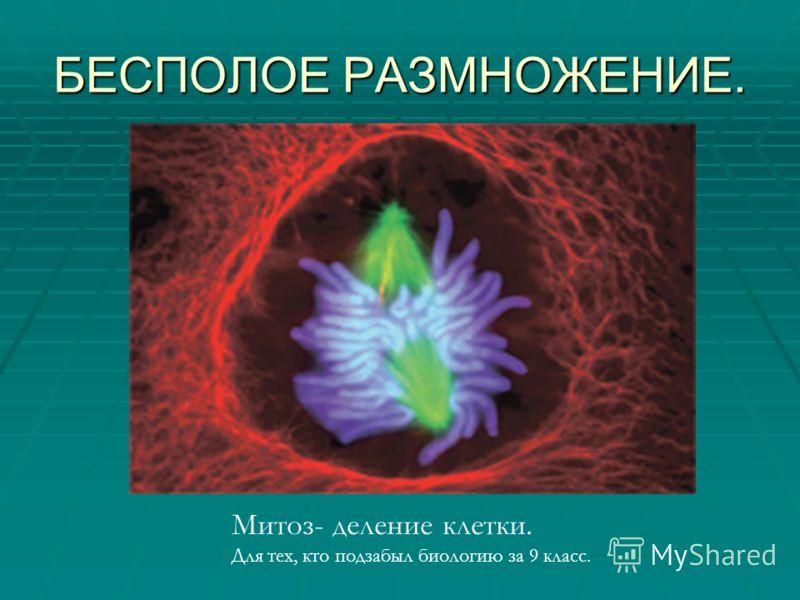 БЕСПОЛОЕ РАЗМНОЖЕНИЕ. Митоз- деление клетки. Для тех, кто подзабыл биологию за 9 класс.