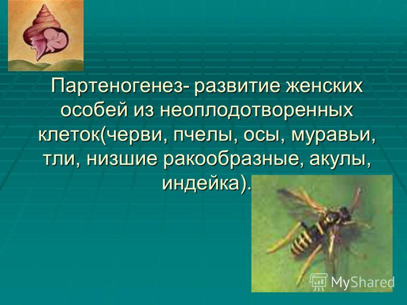 Партеногенез- развитие женских особей из неоплодотворенных клеток(черви, пчелы, осы, муравьи, тли, низшие ракообразные, акулы, индейка).