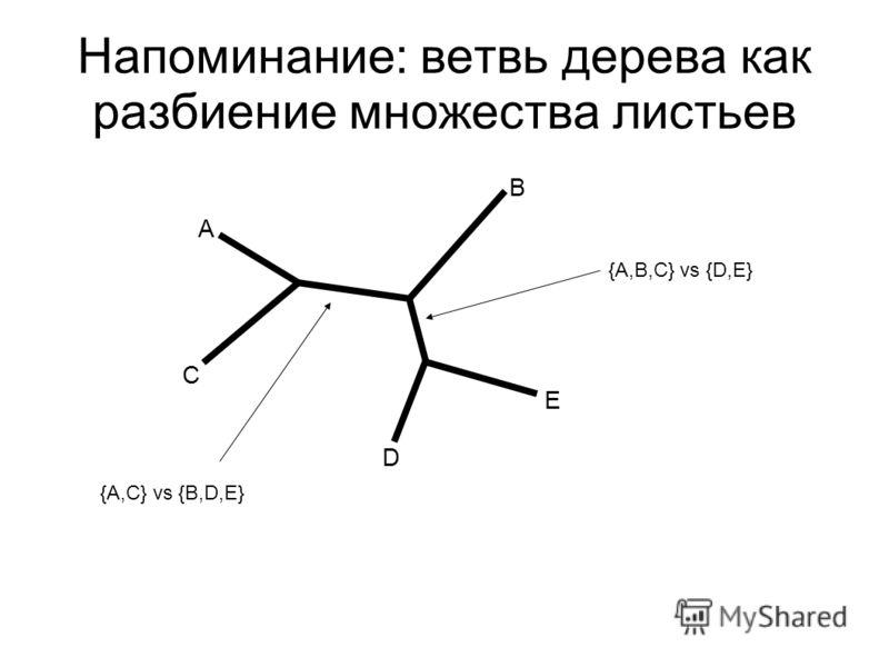 Напоминание: ветвь дерева как разбиение множества листьев A C B D E {A,C} vs {B,D,E} {A,B,C} vs {D,E}