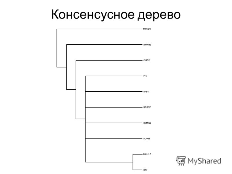 Консенсусное дерево