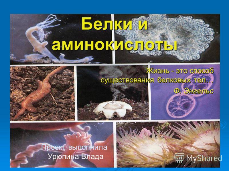 Белки и аминокислоты Жизнь - это способ существования белковых тел… Ф. Энгельс Проект выполнила Урюпина Влада