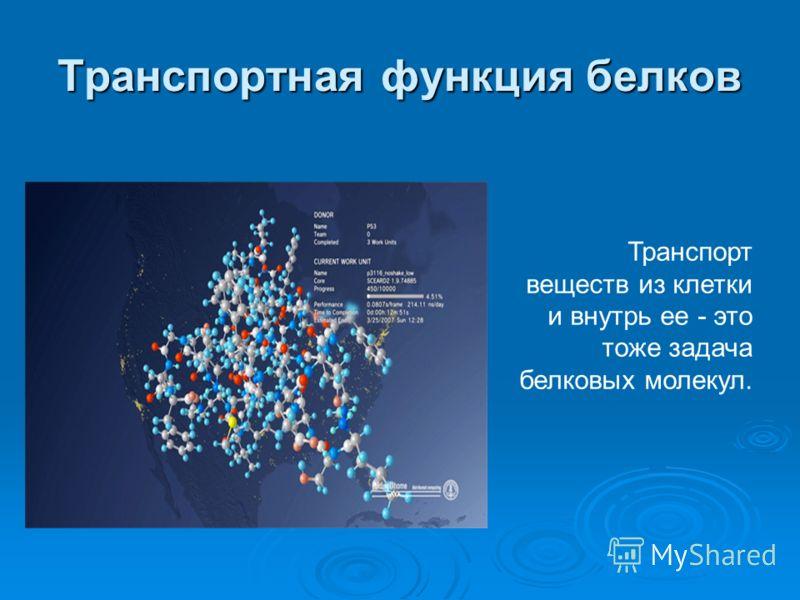 Транспортная функция белков Транспорт веществ из клетки и внутрь ее - это тоже задача белковых молекул.