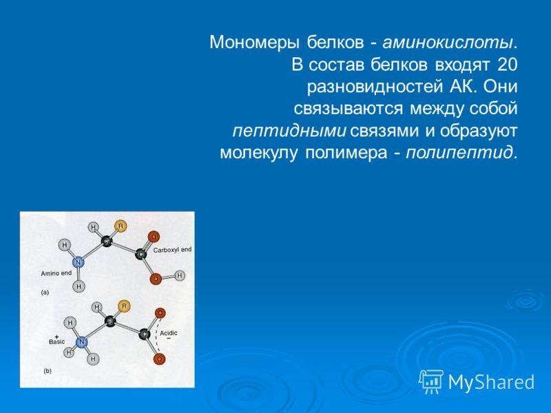 Мономеры белков - аминокислоты. В состав белков входят 20 разновидностей АК. Они связываются между собой пептидными связями и образуют молекулу полимера - полипептид.