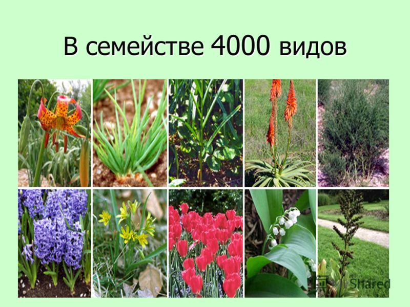 В семействе 4000 видов