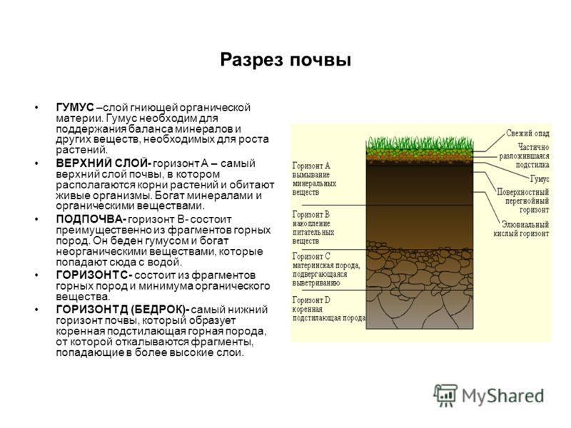 Разрез почвы ГУМУС –слой гниющей органической материи. Гумус необходим для поддержания баланса минералов и других веществ, необходимых для роста растений. ВЕРХНИЙ СЛОЙ- горизонт А – самый верхний слой почвы, в котором располагаются корни растений и о