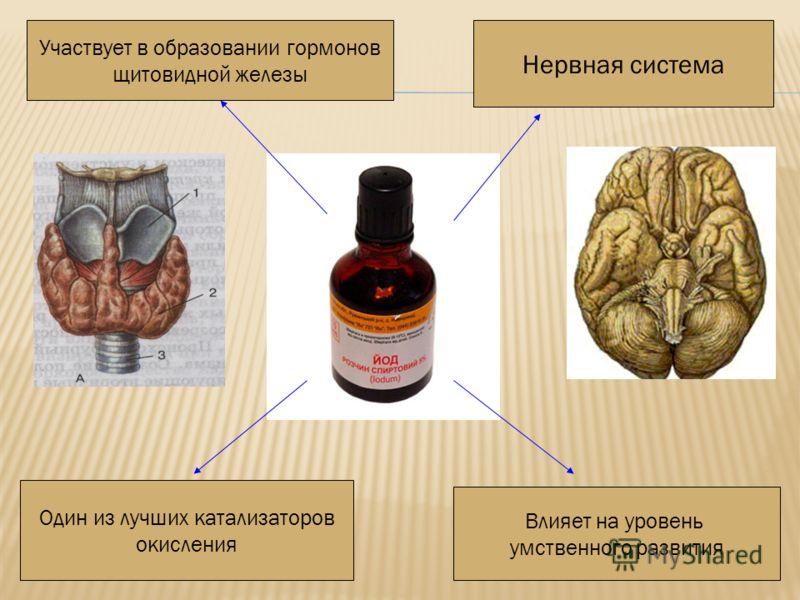 Нервная система Один из лучших катализаторов окисления Влияет на уровень умственного развития Участвует в образовании гормонов щитовидной железы