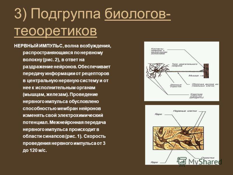 3) Подгруппа биологов- теооретиков НЕРВНЫЙ ИМПУЛЬС, волна возбуждения, распространяющаяся по нервному волокну (рис. 2), в ответ на раздражение нейронов. Обеспечивает передачу информации от рецепторов в центральную нервную систему и от нее к исполните