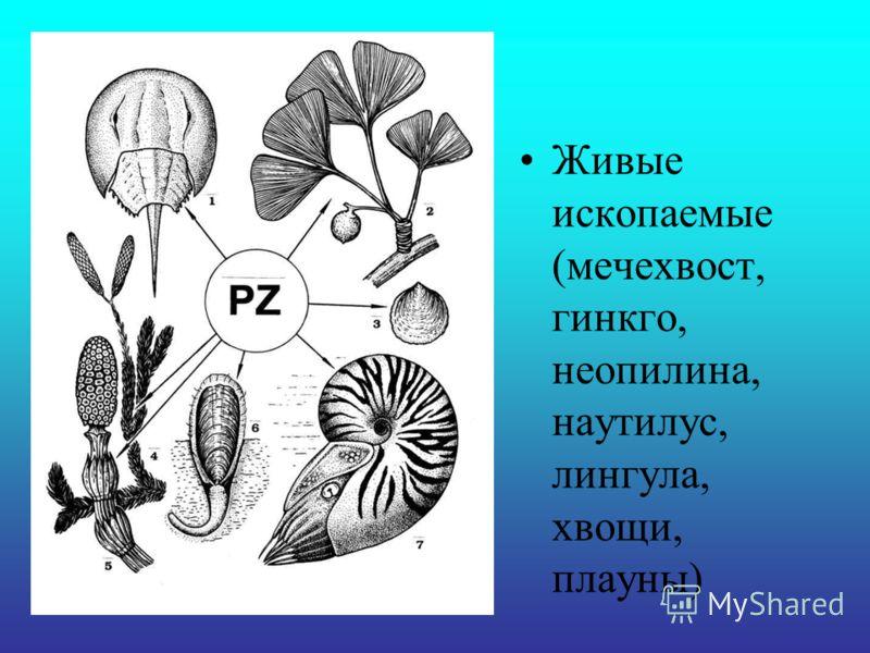 Живые ископаемые (мечехвост, гинкго, неопилина, наутилус, лингула, хвощи, плауны)