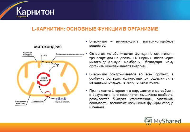 L-карнитин – аминокислота, витаминоподобное вещество. Основная метаболическая функция L-карнитина – транспорт длинноцепочечных жирных кислот через митохондриальную мембрану, благодаря чему организм обеспечивается энергией. L-карнитин обнаруживается в