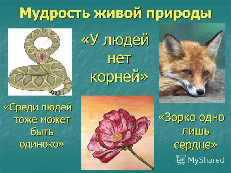 Мудрость живой природы «Среди людей тоже может быть одиноко» «У людей нет корней» «Зорко одно лишь сердце»