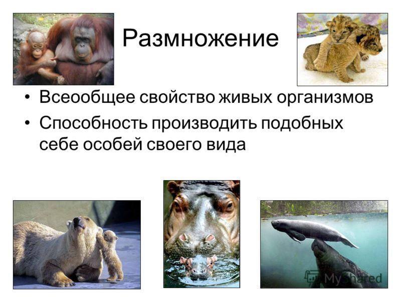 Размножение Всеообщее свойство живых организмов Способность производить подобных себе особей своего вида