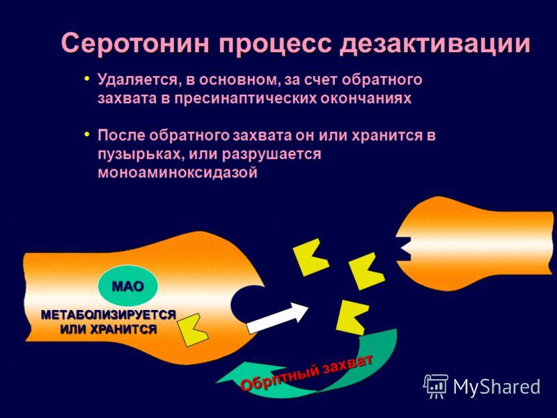Серотонин процесс дезактивации Удаляется, в основном, за счет обратного захвата в пресинаптических окончаниях После обратного захвата он или хранится в пузырьках, или разрушается моноаминоксидазой МЕТАБОЛИЗИРУЕТСЯ ИЛИ ХРАНИТСЯ Обрптный захват МАО