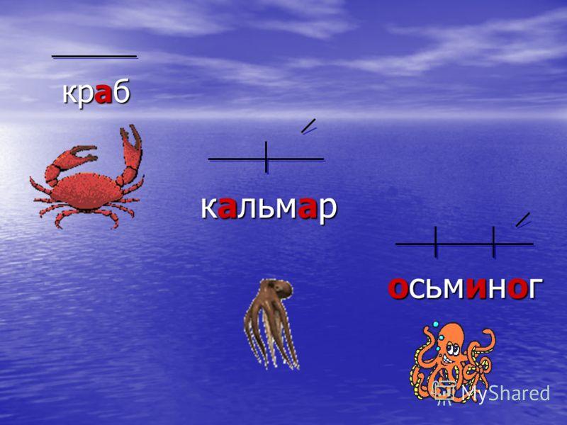 краб кальмар осьминог