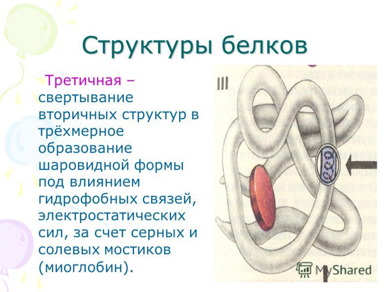 Структуры белков Третичная – свертывание вторичных структур в трёхмерное образование шаровидной формы под влиянием гидрофобных связей, электростатических сил, за счет серных и солевых мостиков (миоглобин).