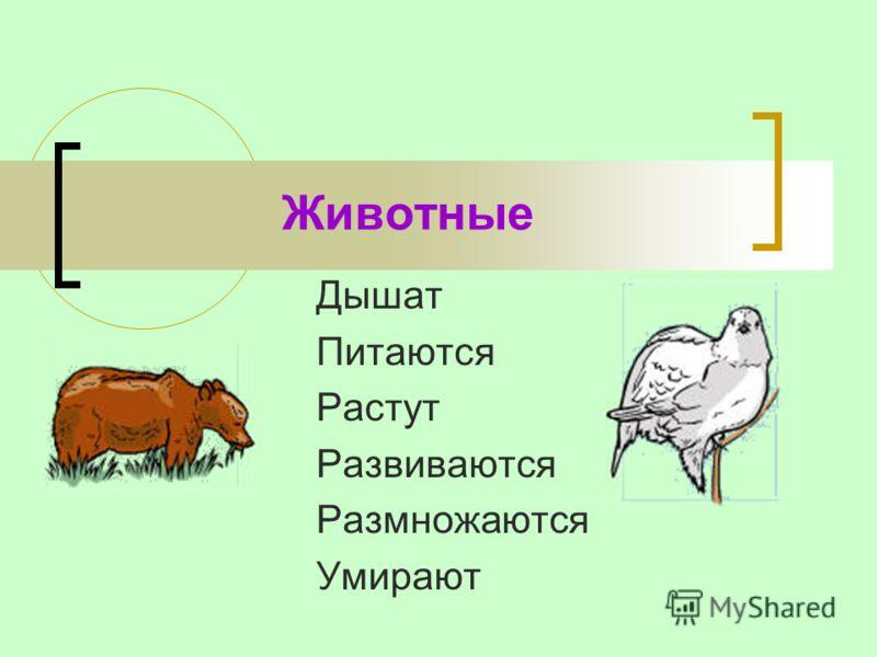 Животные Дышат Питаются Растут Развиваются Размножаются Умирают