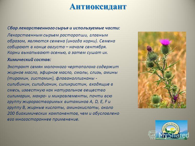 Антиоксидант Сбор лекарственного сырья и используемые части: Лекарственным сырьем расторопши, главным образом, являются семена (иногда корни). Семена собирают в конце августа – начале сентября. Корни выкапывают осенью, а затем сушат их. Химический со