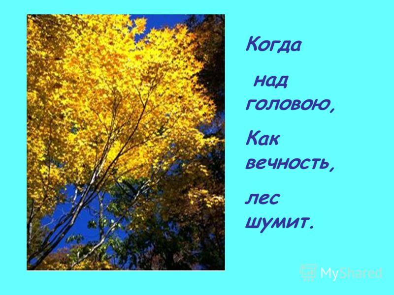 Когда над головою, Как вечность, лес шумит.