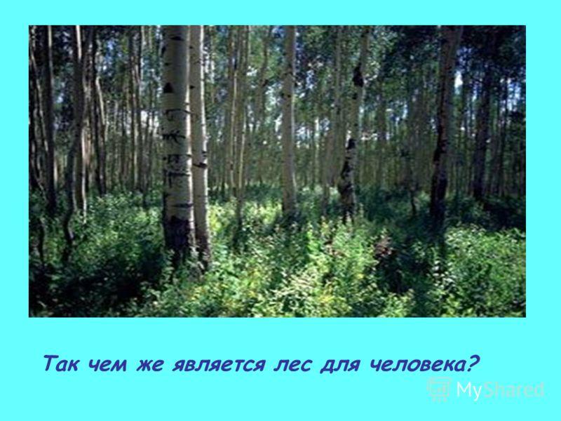 Так чем же является лес для человека?