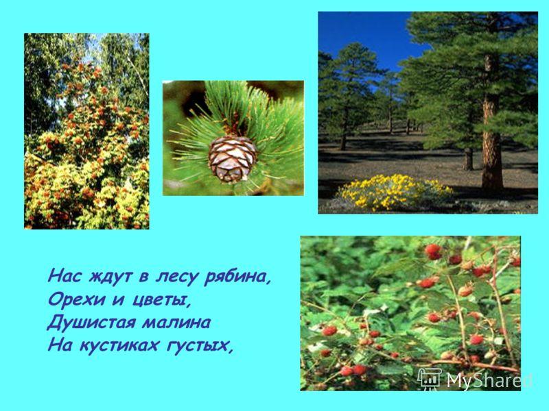 Нас ждут в лесу рябина, Орехи и цветы, Душистая малина На кустиках густых,