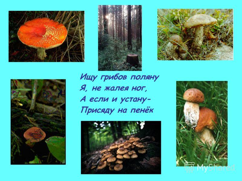 Ищу грибов поляну Я, не жалея ног, А если и устану- Присяду на пенёк