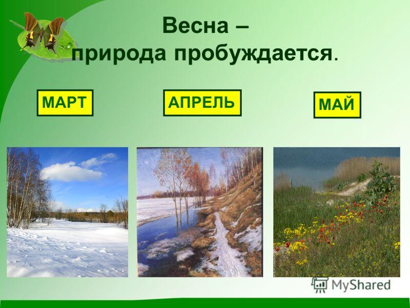 Весна – природа пробуждается. МАРТАПРЕЛЬ МАЙ