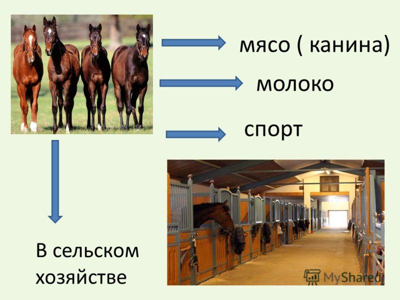 мясо ( канина) молоко В сельском хозяйстве спорт
