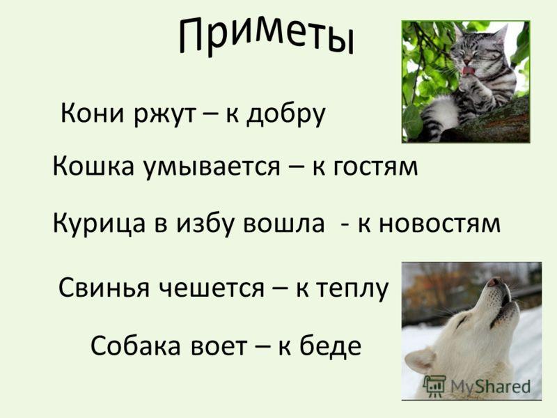 Кони ржут – к добру Кошка умывается – к гостям Курица в избу вошла - к новостям Свинья чешется – к теплу Собака воет – к беде
