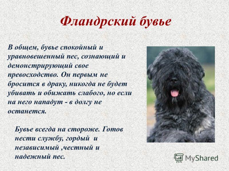 У ак да ь н г б вчр робе а м в о е од Собака – друг человека