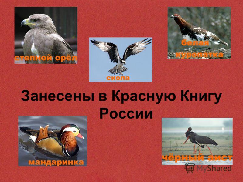 Занесены в Красную Книгу России