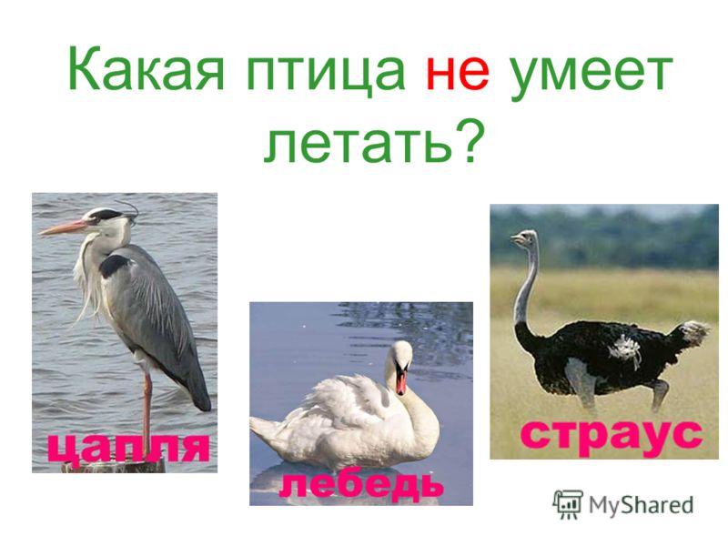Какая птица не умеет летать?